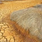 Folgen von Klimawandel und falscher Bodenbearbeitung: Trockenheit reduziert die Ernteerträge | Bild (Ausschnitt): © Hoxuanhuong [Royalty-Free] - Dreamstime.com