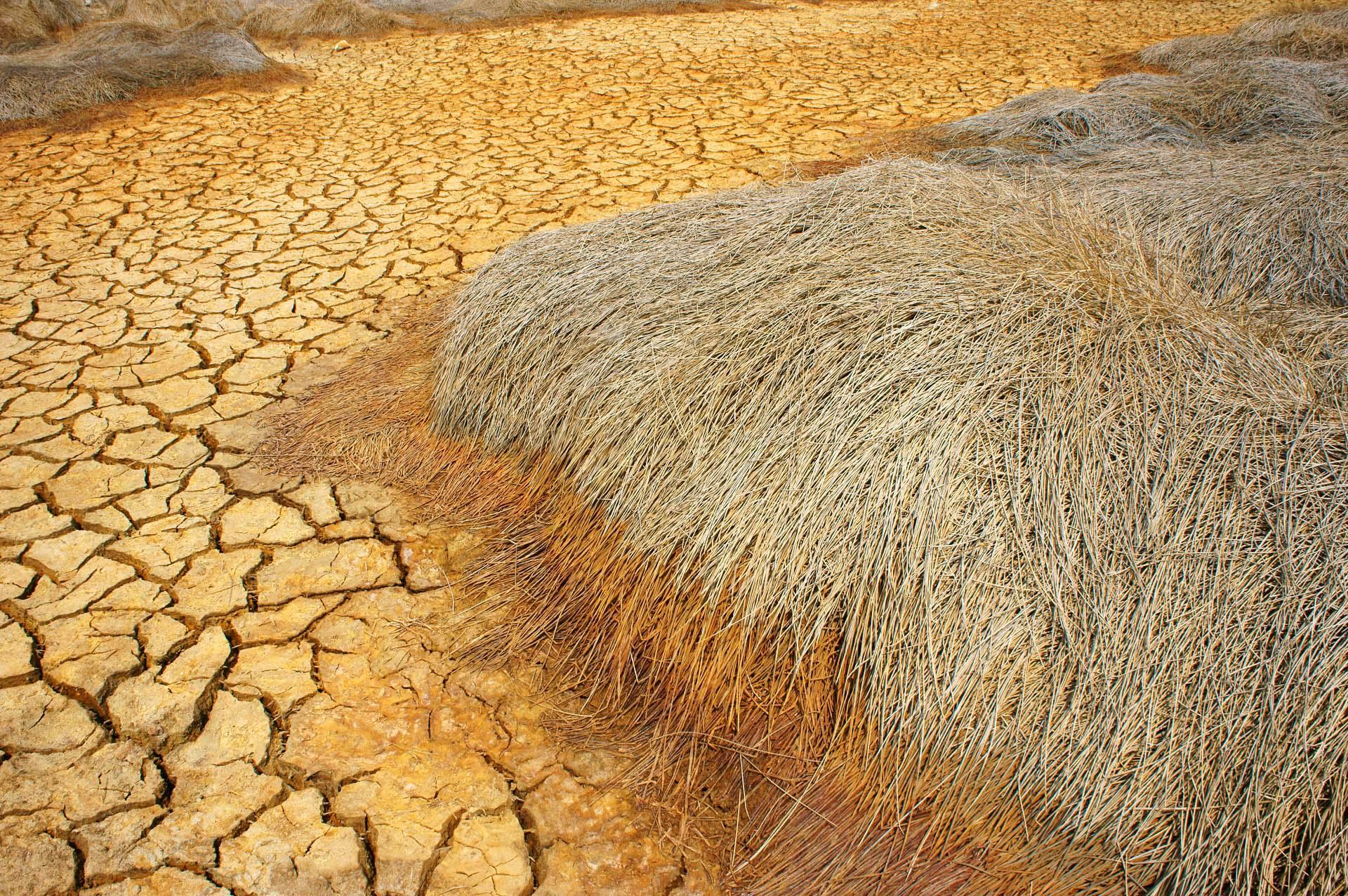Folgen von Klimawandel und falscher Bodenbearbeitung: Trockenheit reduziert die Ernteerträge