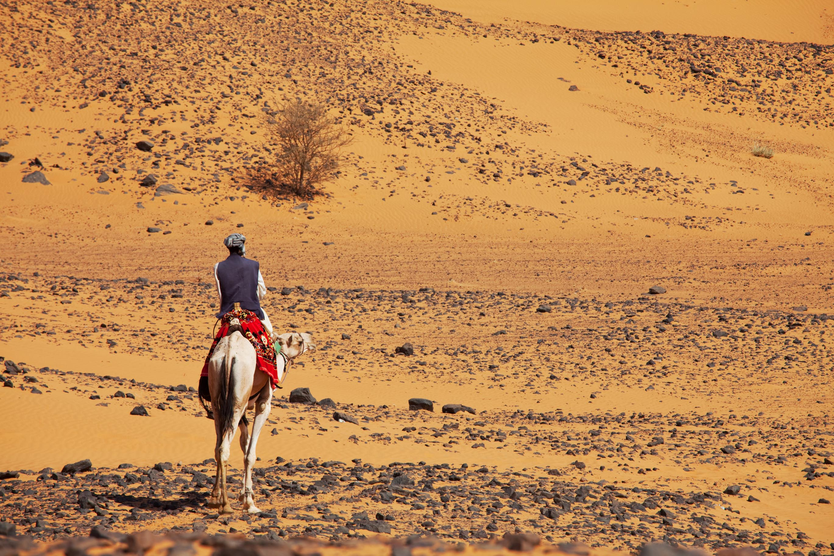 Sudanese camel rider | Bild (Ausschnitt): © Kamchatka - Dreamstime.com