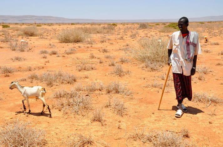 Dürre Bauer Afrika Im südlichen Afrika und am Horn von Afrika trifft die Dürre die Menschen besonders hart. Ein Bauer in Somaliland, Ähtiopien. |  Bild: © Oxfam East Africa  - Wikimedia Commons