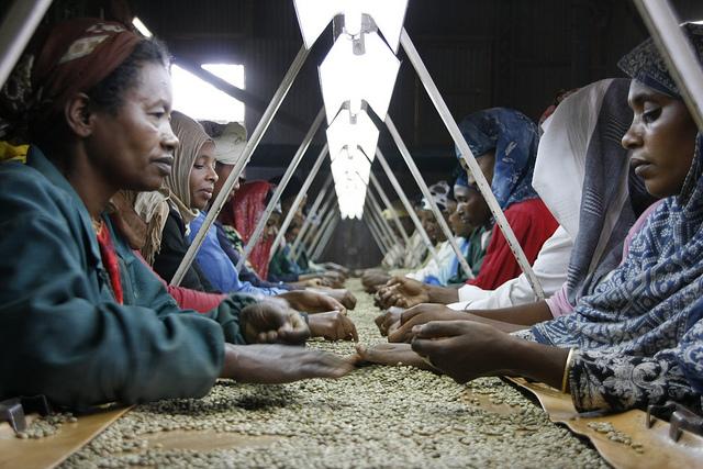 Kaffeearbeit Äthiopien
