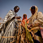 Mais Ernte Afrika | Bild (Ausschnitt): © Oxfam International [CC BY-NC-ND 2.0] - flickr