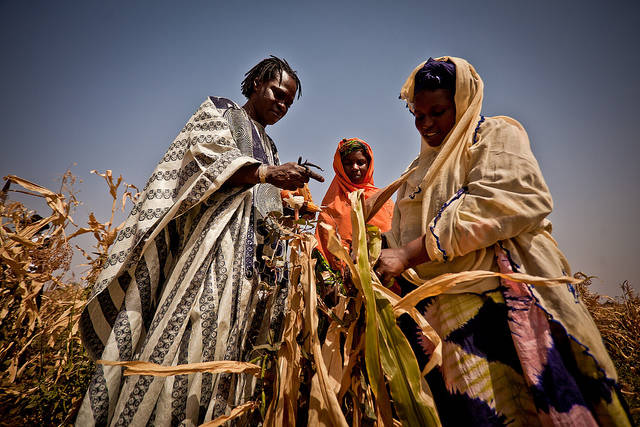 Mais Ernte Afrika  Bild: ©  Oxfam International [CC BY-NC-ND 2.0]  - flickr
