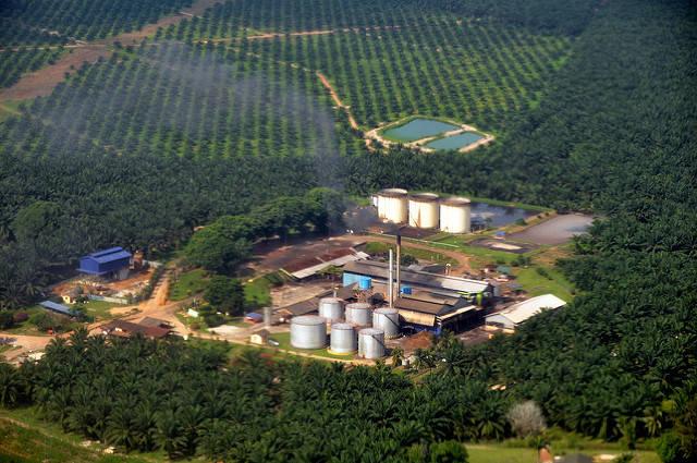 Palmölfabrik  Bild: ©  Marufish [CC BY-SA 2.0]  - Flickr