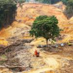 gerodeter Regenwald Abholzung und Waldbrände bedrohen Afrikas Regenwälder | Bild (Ausschnitt): © Tan Kian Yong | Dreamstime.com [Royalty Free] - Dreamstime