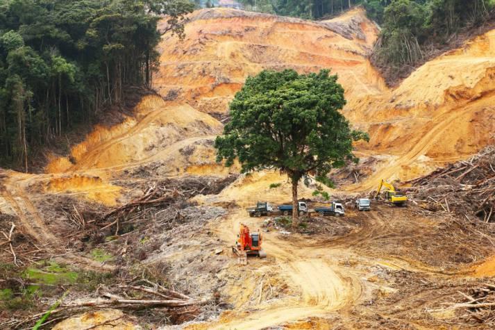 "gerodeter Regenwald Abholzung und Waldbrände bedrohen Afrikas Regenwälder |  Bild: ""Logging activity within tropical rainforest"" © Tan Kian Yong | Dreamstime.com [Royalty Free]  - Dreamstime"