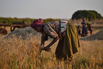 Äthiopische Bäuerin auf Feld