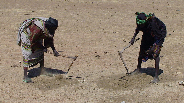 Women search for scraps of grain to eat in ant hills, Azoza village, Chad