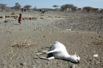 Dürre in Äthiopien