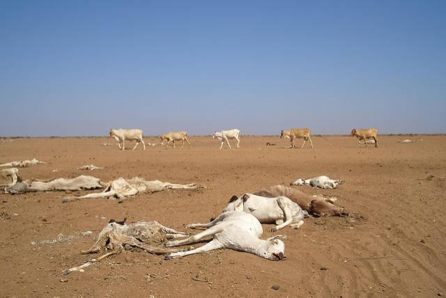 Dürre in Kenia  Bild: © Oxfam International [CC BY-NC-ND 2.0]  - Flickr