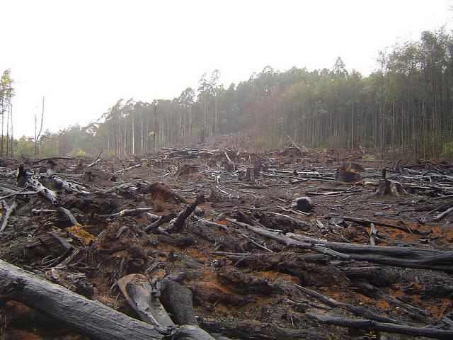 Bild eines gerodeten Waldgebietes  Bild: ©  crustmania [CC BY 2.0]  - flickr.com