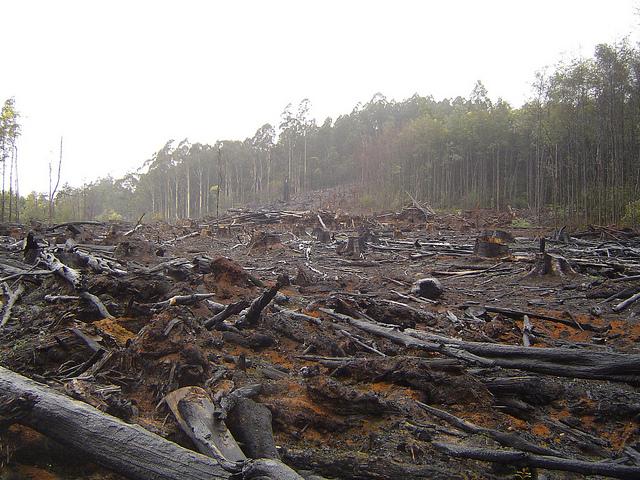 Bild eines gerodeten Waldgebietes