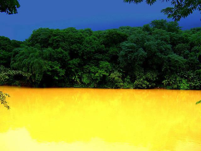Regenwald Brasilien Regenwald Brasilien    Bild: © Jose Roberto V Moraes  [CC BY 2.0]  - Flickr