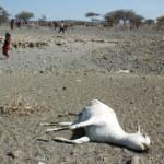 Trockenheit in der Oromia-Region Eine tote Ziege in der trockenen Oromia-Region | Bild (Ausschnitt): © Andrew Heavens [CC BY-NC-ND 2.0] - Flickr
