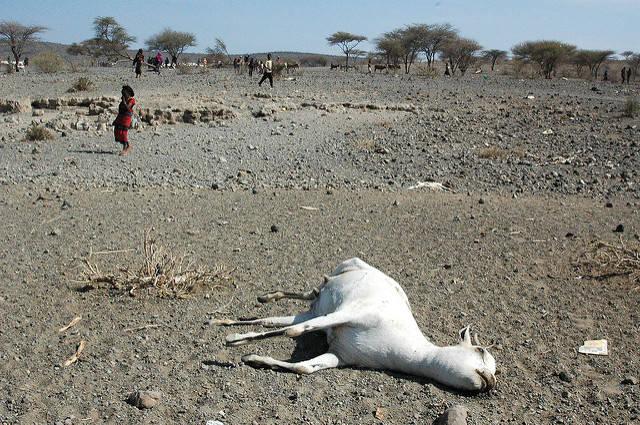 Trockenheit in der Oromia-Region Eine tote Ziege in der trockenen Oromia-Region |  Bild: ©  Andrew Heavens [CC BY-NC-ND 2.0]  - Flickr
