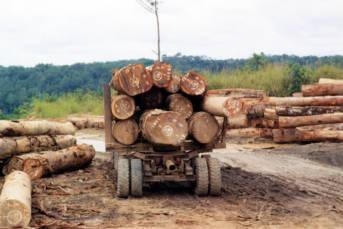 Zentralafrikanische Republik- Holztransport Tropenhölzer finanzieren die Rebellen in der Zentralafrikanischen Republik | Bild: © JG Collomb [CC BY 2.0]  - Wikicommons