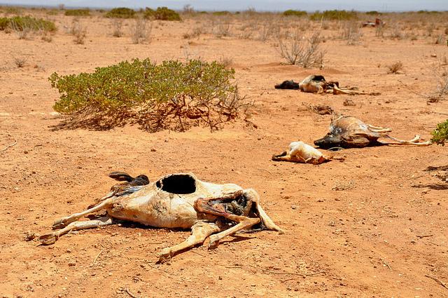 Der Wassermangel in Ostafrika