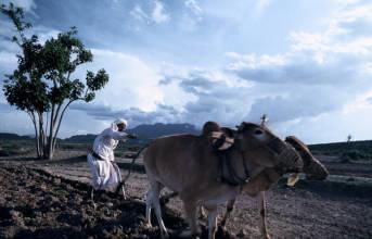 Landwirtschaft Jemen