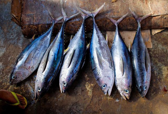 Fische auf einem Markt in Somalia
