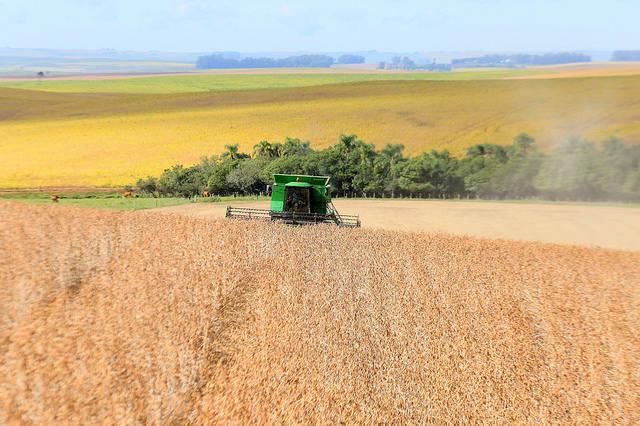Sojafeld in Brasilien Im Nordosten Brasiliens müssen einheimische Erzeugnisse dem Sojaanbau für ausländische Großkonzerne weichen. |  Bild: © Governo do Estado do Rio Grande do Sul [CC BY-NC 2.0]  - flickr