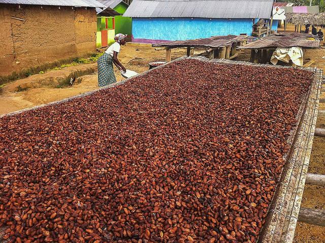 Kakaoarbeiterin Ghana In Ghana sind Millionen von Menschen auf die Einnahmen durch den Kakaoanbau angewiesen    Bild: © Francesco Veronesi [CC BY-SA 2.0]  - Flickr