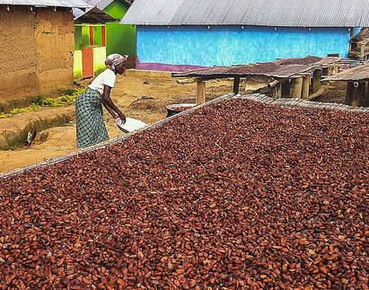 Kakaoarbeiterin Ghana