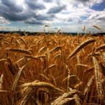 Getreidepreisspekulation NGOs gehen davon aus, dass die Nahrungsmittelpreiskrise 2007 - 2008 von Getreidepreisspekulationen ausgelöst wurde. | Bild (Ausschnitt): © Falk Lademann [CC BY 2.0] - Flickr