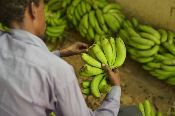 Bei Monoprodukten wie der Banane können nur bestimmte Siegel wie Fairtrade den fairen Handel gewährleisten. |  Bild: © AMISOM [CCo 1.0]  - Flickr