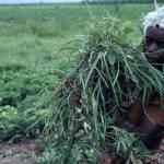 Frau in Nigeria | Bild (Ausschnitt): © World Bank Photo Collection [CC BY-NC-ND 2.0] - flickr