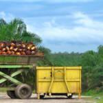 Das internationale Unternehmen Socfin vergrößert seine Palmölplantagen in Afrika und vertreibt für Landeinnahmen mittels Gewalt die Kleinbauern und indigenen Gemeinschaften | Bild (Ausschnitt): © Rainforest Action Network [CC BY-NC 2.0] - flickr