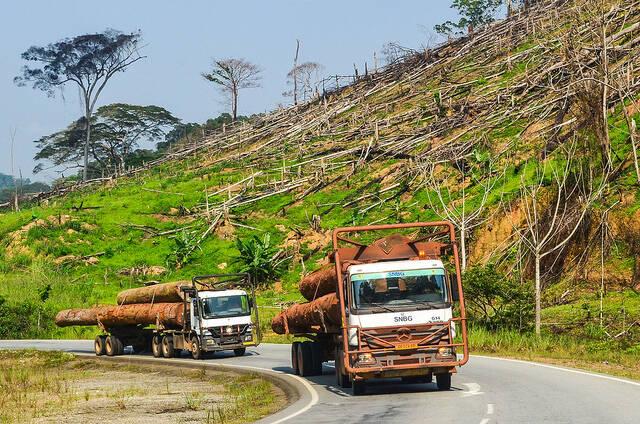 Abholzung Gabun Korrupte Holzlieferanten  verkaufen illegales Holz in die USA |  Bild: ©  jbdodane [CC BY-NC 2.0]  - flickr