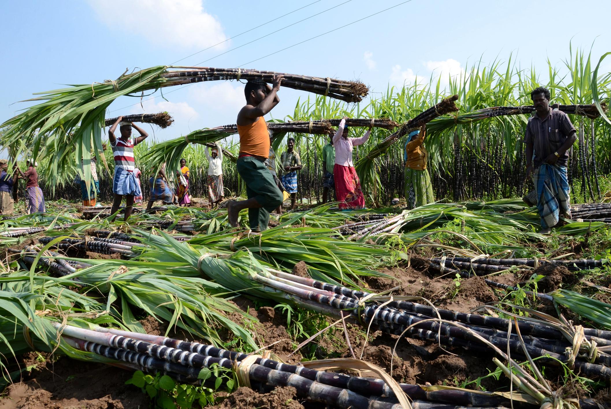 Zucker Plantage Arbeiter