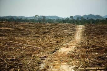 Entwaldung für eine Palmöl Plantage  Bild: © Rainforest Action Network [CC BY-NC 2.0]  - Flickr