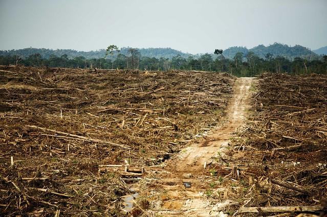 Entwaldung für eine Palmöl Plantage