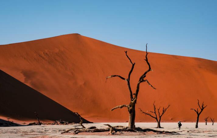 Vertrocknete Bäume in Wüste vor Sanddüne Vor allem die intensive Landwirtschaft führt zu einer massiven Minderung der Fruchtbarkeit - immer mehr Böden verwüsten    Bild: © Ralph Kränzlein [CC BY-NC-ND 2.0]  - Flickr