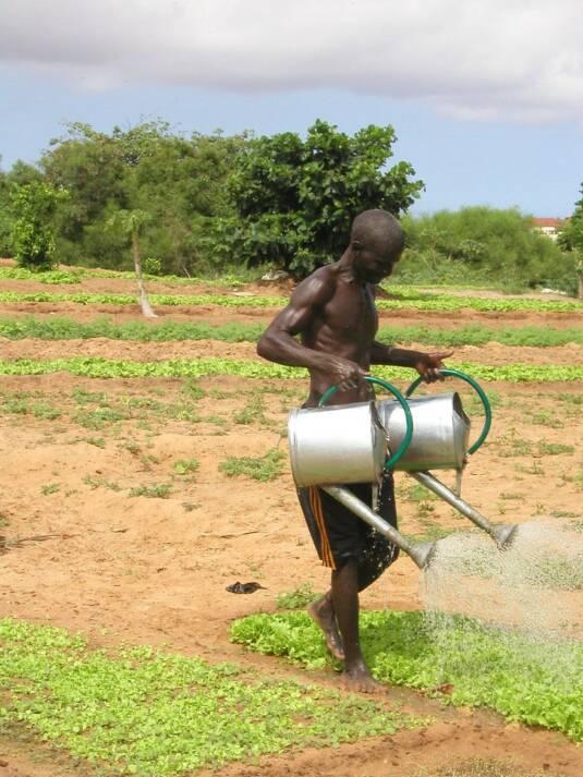 Senegalesischer Bauer beim Bewässern seines Feldes Senegalesischer Bauer beim Bewässern seines Feldes |  Bild: © Rikolto (Vredeseilanden) [CC BY-NC 2.0]  - Flickr