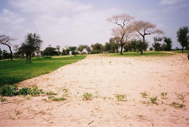 Böden in Ländern der Sub-Sahara: Immer attraktiver für Investoren