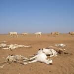 Verendete Ziegen aufgrund einer Dürre in Kenia | Bild (Ausschnitt): © Oxfam International [CC BY-NC-ND 2.0] - flickr