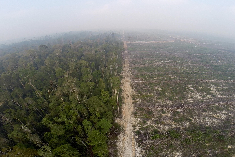 Abholzung des Regenwaldes zugunsten von Palmölplantagen in Indonesien  |  Bild: © GLOBAL 2000 [CC BY-ND 2.0]  - flickr