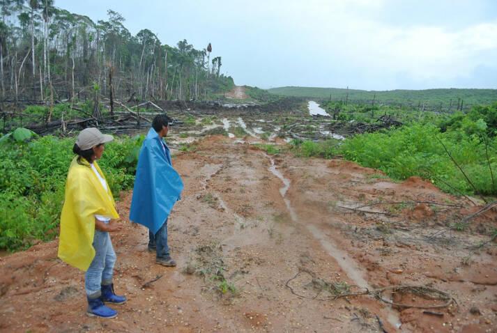 Palmöl Plantage in Peru Ganze Landstriche werden in Südamerika für den Anbau von Palmöl abgeholzt |  Bild: © Rettet den Regenwald e.V [CC BY-NC-ND 2.0)]  - flickr