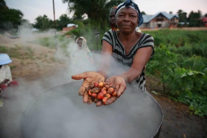 Palmöplantagen im Kongo Die Arbeiter der Palmölplantagen im Kongo müssen teilweise unter menschenunwürdigen Bedingungen arbeiten |  Bild: © MONUSCO Photos [CC BY-SA 2.0]  - flickr