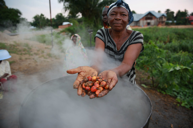 Palmöplantagen im Kongo