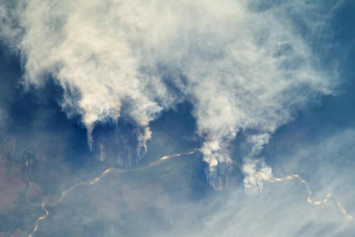 Feuer im Amazonas-Regenwald. Die Rinderzucht treibt die Entwaldung des Amazonas voran.    Bild: © NASA Earth Observatory [Attribution 2.0 Generic  (CC BY 2.0)]  - flickr