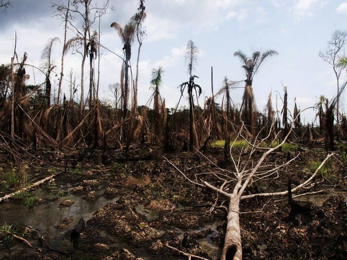 Ölkatastrophe im Nigerdelta Shell muss sich für Umweltverschmutzung und Menschenrechtsverletzungen im Nigerdelta verantworten. |  Bild: ©  Sosialistisk Ungdom (SU) [CC BY-ND 2.0]  - flickr