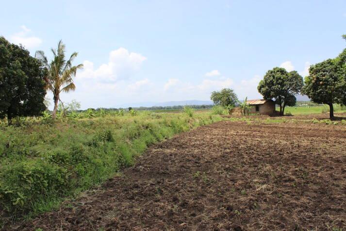 Bild AGRA Tansania Der fragwürdige Ansatz von AGRA hat nicht dazu beigetragen, dass sich die Ernährungssituation in den afrikanischen Ländern verbessert. Viele Probleme werden durch AGRA eher verschärft.  |  Bild: © Pia Andrews  [CC BY 2.0]  - flickr