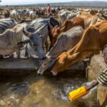 Dürre Schon heute haben viele Länder mit Wasserknappheit und Ernährungsunsicherheit zu kämpfen. In Zukunft werden sich diese Probleme weiter verschärfen. | Bild (Ausschnitt): © UNICEF Ethiopia [CC BY-NC-ND 2.0] - Flickr