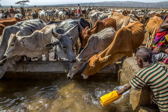 Dürre Schon heute haben viele Länder mit Wasserknappheit und Ernährungsunsicherheit zu kämpfen. In Zukunft werden sich diese Probleme weiter verschärfen. |  Bild: © UNICEF Ethiopia [CC BY-NC-ND 2.0]  - Flickr