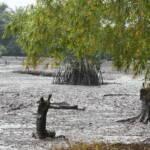 Ölversuchte Landschaft in Goi Creek im Nigerdelta/Nigeria. Im August 2010. So wie auf diesem Foto sieht es in fast allen Regionen des Nigerdeltas aus: Öllecks aufgrund von kaputten Pipelines verursachen in Nigeria immer wieder verheerende Schäden für Natur und Mensch. | Bild (Ausschnitt): © Friends of the Earth International [CC BY-NC-ND 2.0] - flickr