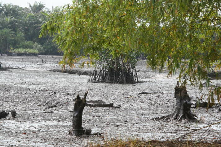 Ölversuchte Landschaft in Goi Creek im Nigerdelta/Nigeria. Im August 2010. So wie auf diesem Foto sieht es in fast allen Regionen des Nigerdeltas aus: Öllecks aufgrund von kaputten Pipelines verursachen in Nigeria immer wieder verheerende Schäden für Natur und Mensch.  |  Bild: © Friends of the Earth International [CC BY-NC-ND 2.0]  - flickr