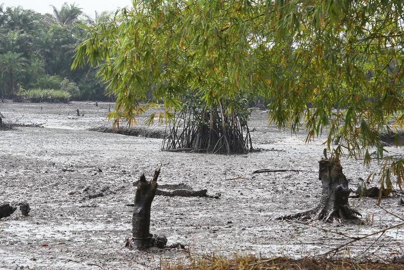 Ölversuchte Landschaft in Goi Creek im Nigerdelta/Nigeria. Im August 2010.
